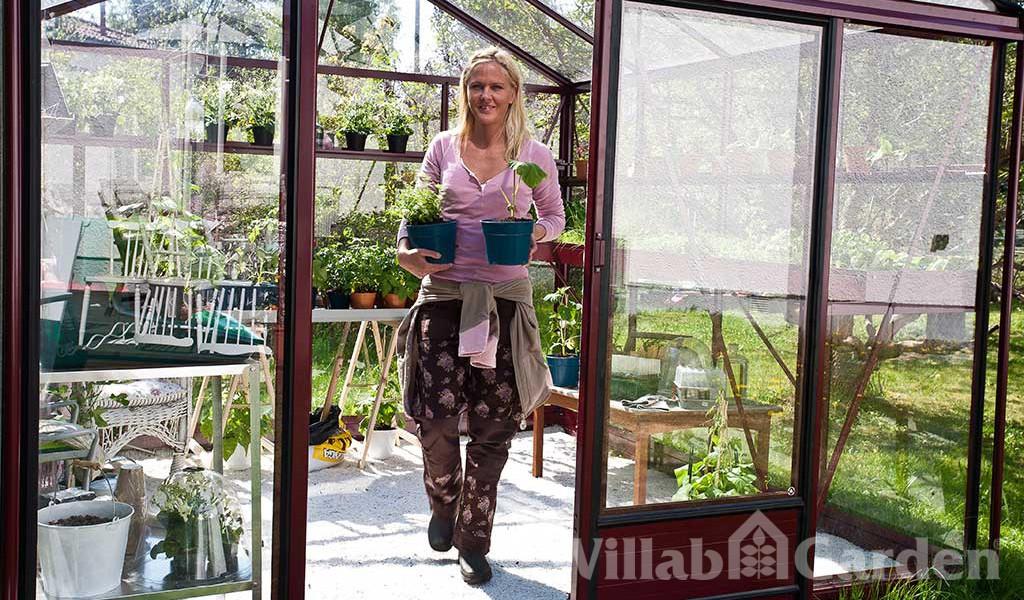 Vår i växthuset